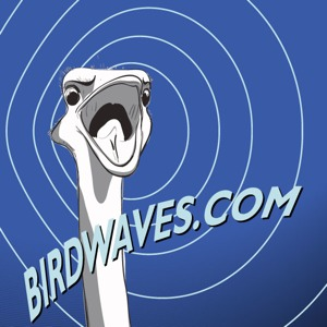 Birdwaves Media Presents: The ProgCast